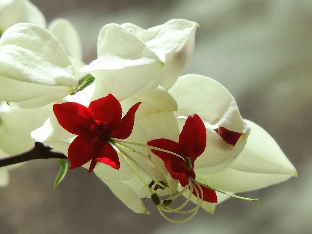 室内盆花004.JPG